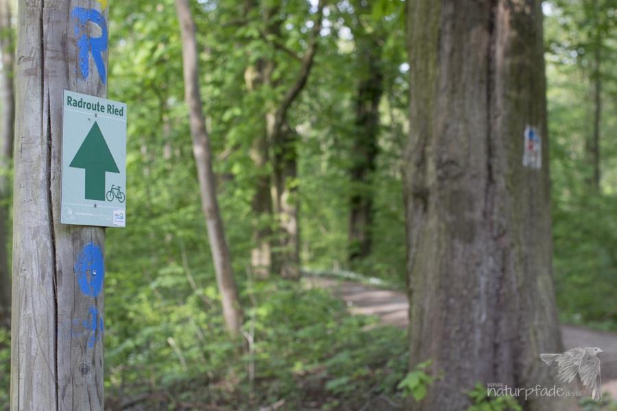 Die Knoblochaue bietet viele Kilometer attraktiver Radwege...